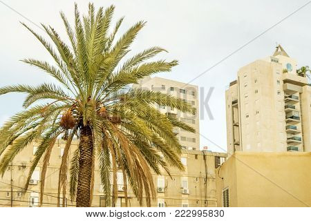 Architecture buildings and exotic palm trees. Summer day city, holidays in Israel. Urban central district , sky and clouds on background. Ancient downtown constructions