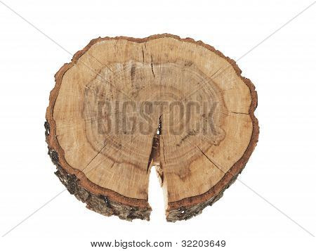 Cross Section Of Tree Trunk Showing Growth Rings Isolated On White