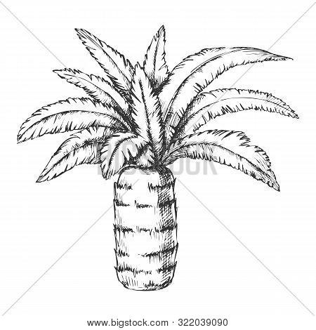 Pineapple Palm Tropical Tree Monochrome Vector. Canary Island Jungle Flowering Palm Trunk Leaf Plant