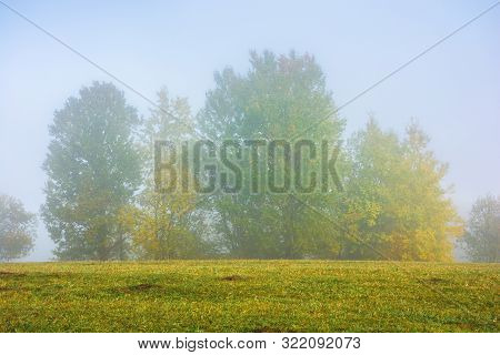Beech Trees On The Grassy Meadow On A Foggy Morning. Wonderful Early Autumn Scenery. Beautiful Natur