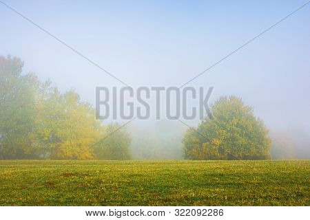 Trees On The Grassy Meadow On A Foggy Morning. Wonderful Early Autumn Scenery. Beautiful Nature Back