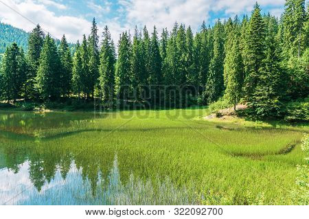 Beautiful Summer Landscape In Mountains. Lake Among The Spruce Forest. Wonderful Sunny Weather With