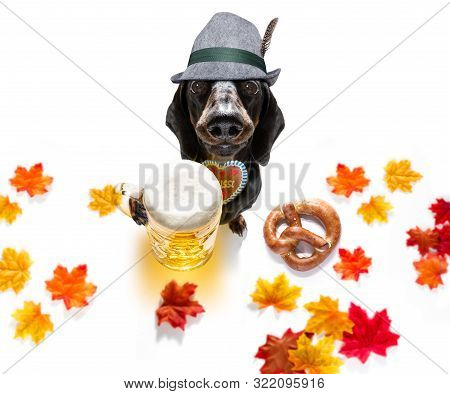 Bavarian Chihuahua  Dog With  Gingerbread And  Mug  Isolated On White Background , Ready For The Bee