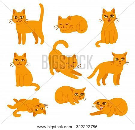 Cartoon Cat Set With Different Poses And Emotions. Cat Behavior, Body Language And Face Expressions.