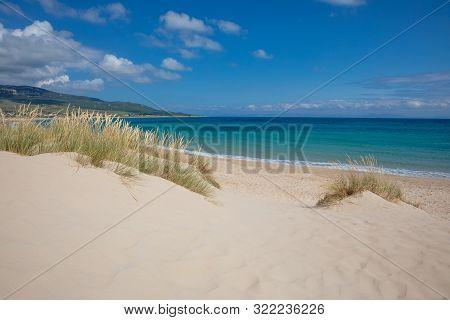 Little Dunes With Plants And Atlantic Ocean In Beach Of Cadiz