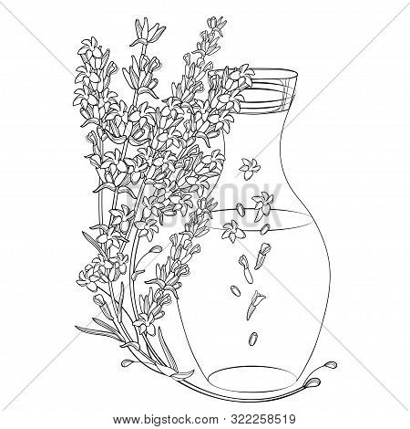 Vector Corner Bouquet With Outline Lavender Flower Bunch, Bud, Leaves And Bottle Of Essential Oil In