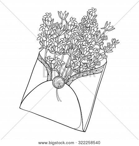 Vector Bouquet With Outline Lavender Flower Bunch, Bud And Leaves In Open Craft Envelope In Black Is