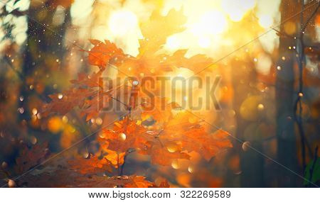 Autumn colorful bright Leaves swinging in a tree in autumnal Park. Autumn colorful background, fall backdrop. Backlit, sun flare. Beautiful nature scene. Autumnal park. Wide screen backdrop