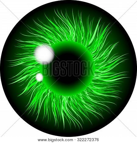 Eyes Contact Lens With Green Color Illustration Isolated On Transparent Background . Eyes Art. Woman