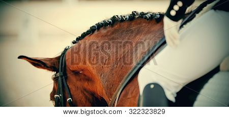 Pigtails On Neck Sports Brown Horse. Dressage Of Horses. Equestrian Sport.