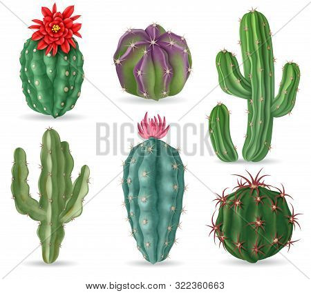 Realistic Cactus. Decorative Desert Cactuses Plants For Mexican Landscape And House Interior. 3d Suc