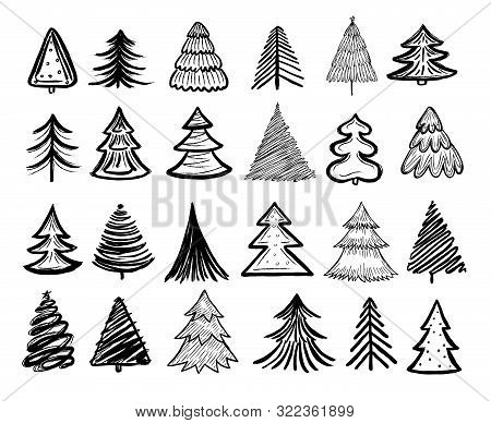Sketch Fir Tree. Christmas Trees Scribble Pen Drawn Holiday Decoration. Vintage Doodle Graphic Vecto