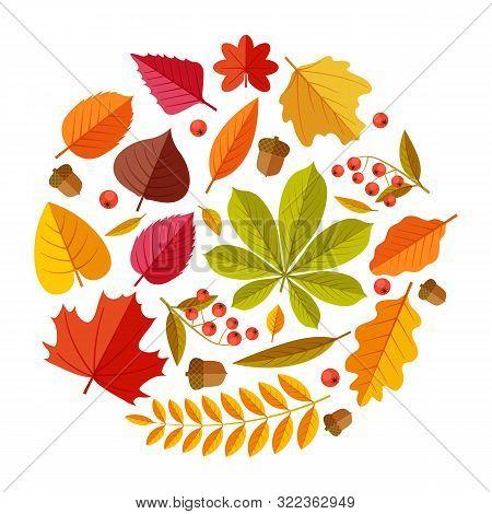 Flat Autumn Leaves. Colorful Fall Park Leaf Maple Elm Oak Chestnut, Geometric Flat Foliage. Round Fa