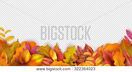 Autumn Banner. Fall Leaves Background. Realistic Vector Autumn Leaves Isolated On Transparent Backgr