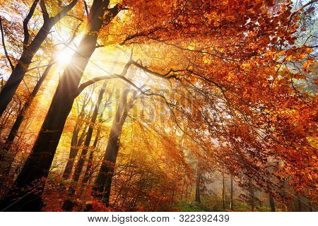 Colorful Autumn Scenery In A Forest, With Sunrays Falling Through Gold And Red Foliage In Wafts Of M