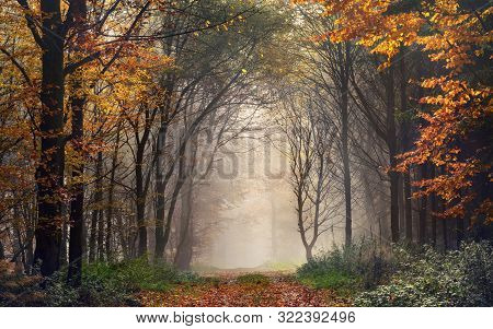 Autumn Trees Shaping A Natural Archway In A Misty Forest, With A Path Leading Into The Bright Fog