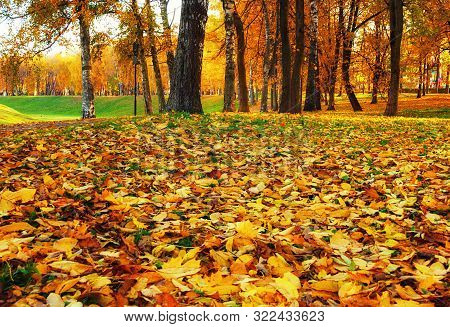 Fall landscape view of fall park at sunset, focus at the fall leaves on the foreground. Row of fall trees with fallen dry leaves covering the ground. Fall nature landscape scene, colorful fall season