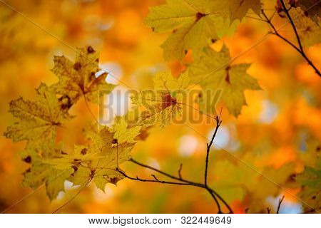 Photo Of Autumn Leaves On Blurred Background In Autumn Garden