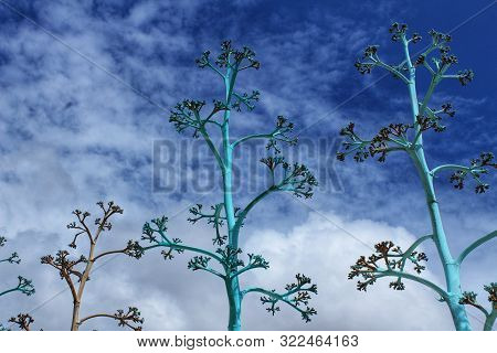 Blue Sky And Blue Painted Plants Landscape In Rodalquilar, Almeria, Spain