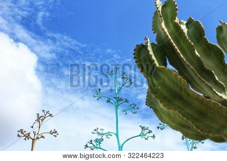 Blue Sky And Blue Painted Plants And Cactus Landscape In Rodalquilar, Almeria