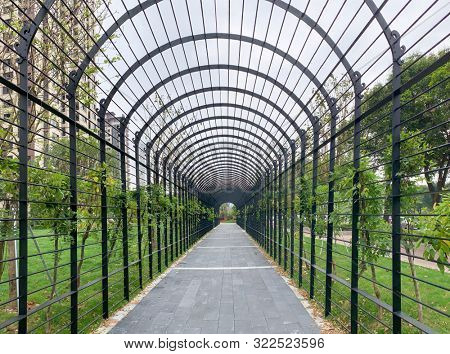 Walkway through tunnel filled with shrub and trees in a small street park,Fuzhou,China