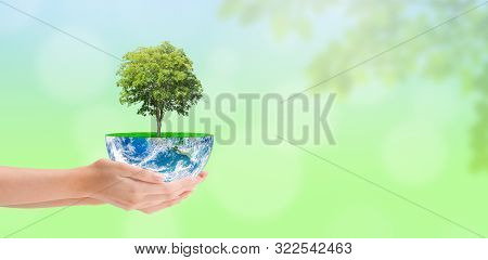 Ecology And Conservation Concept : Woman Hand Holding Green Tree Growth On Planet Earth Globe With G