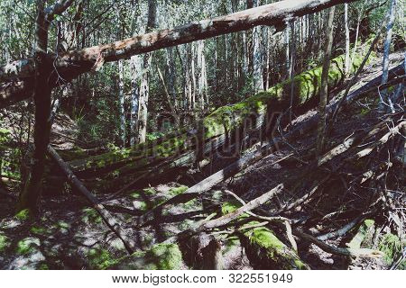 Wild Australian Bush During A Hike In Tasmania With Its Untouched Landscape