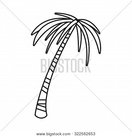 Vector Design Of Palm And Tall Symbol. Set Of Palm And Coco Stock Vector Illustration.