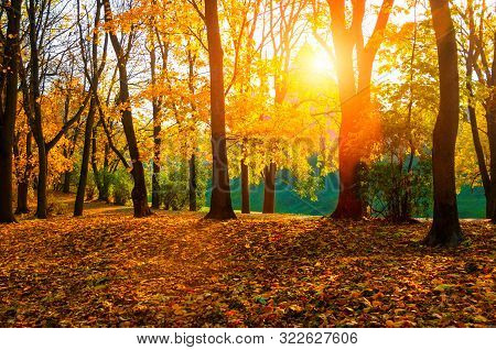Autumn sunny landscape. Autumn park trees and fallen autumn leaves on the ground along the autumn park alley in sunny autumn October day. Autumn sunny landscape
