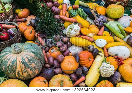 Fresh Autumn Harvest Vegetables Lying All Together In A Bunch