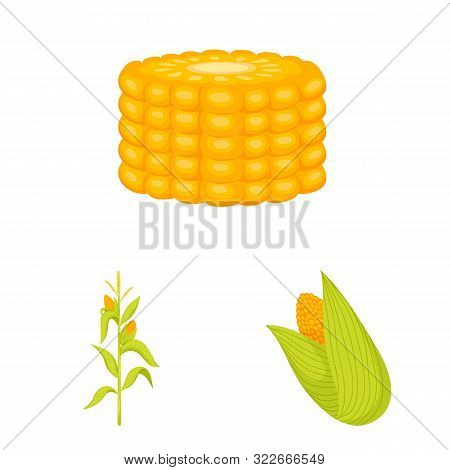 Vector Illustration Of Maize And Food Sign. Set Of Maize And Crop Vector Icon For Stock.