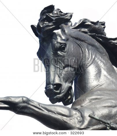 horse head statue with white background. poster