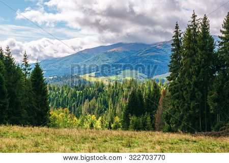 Coniferous Forest On The Grassy Hill In Mountains. Borzhava Mountain Ridge In The Distance Beneath A