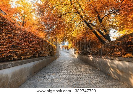 Natural Trees And Walkway At Public Park In Autumn, Beautiful Scenic  View Of Outdoor Garden Tree Pl