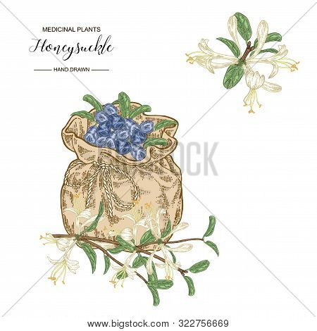 Honeysuckle Flowers, Ripe Berries And Textile Bag. Lonicera Japonica. Medical Plants Hand Drawn. Vec