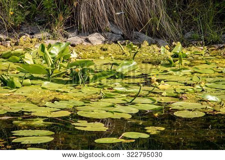 Image Of Karl Heine Canal With Water Lilies, Birds And Insects In Leipzig Between City And Lindenau