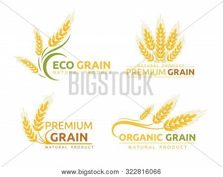 Premium Grain Flat Vector Logotype Designs Set. Organic Cereal Crops, Natural Product Advertising. R