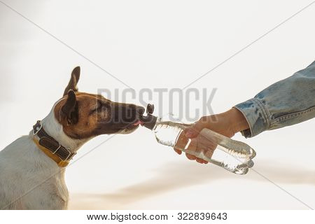 The Pet Owner Gives Water To The Dog On A Hot Summer Day. Human Hand With A Water Bottle Gives A Dri