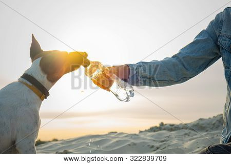 Rehydrating A Thirsty  Dog On A Hot Summer Day. Human Hand With A Water Bottle Gives A Drink To The