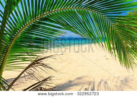 Curved coconut tree leaf bedning over white sand beach, Thailand