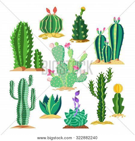 Set Of Wildlife Cactus Or Succulent Plant. Blossom Of Saguaro And Cereus, Golden Barrel Cacti And St