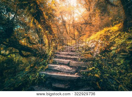 Stone Steps In Beautiful Old Tropical Forest In Fog At Sunset In Autumn. Colorful Fall Landscape Wit