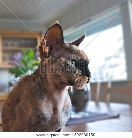 Ugly Cat Has Short Hair And Tipped Ears And A Scowl On Its Face.
