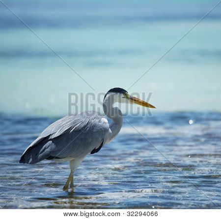 heron on Maldives poster