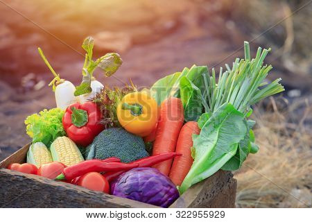Organic Vegetables On Wood ,fresh Organic Vegetables.organic Vegetables And Fruits, Food Background.