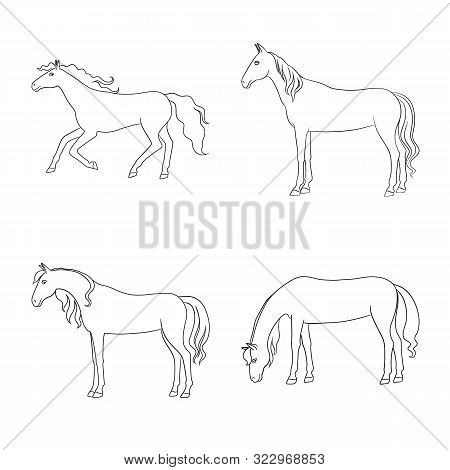 Isolated Object Of Stallion And Galloping Icon. Collection Of Stallion And Riding Vector Icon For St