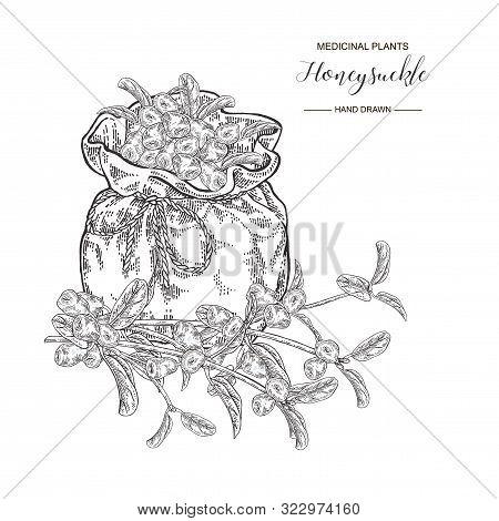 Honeysuckle Branch With Berries. Lonicera Japonica. Medical Plants Hand Drawn. Vector Botanical Illu