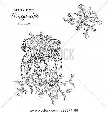Honeysuckle Branch With Flowers And Berries. Lonicera Japonica. Medical Plants Hand Drawn. Vector Bo