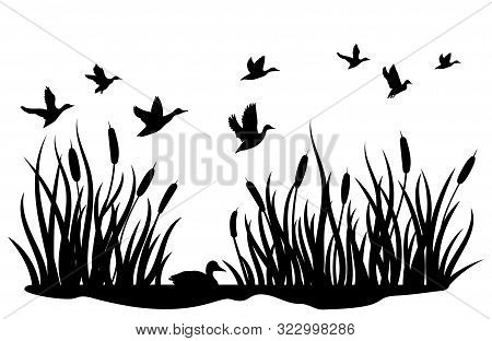 A Flock Of Wild Ducks Flying Over A Pond With Reeds. Black And White Illustration Of Ducks Flying Ov