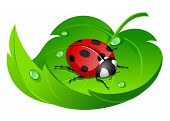 illustration of ladybug on leaf isolated on white poster